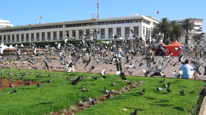 V. Muhammed Meydanı'nda güvercinler