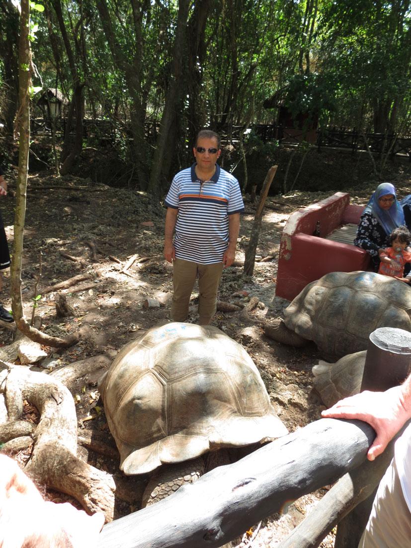 Hapishane Adası'nın dev kaplumbağaları