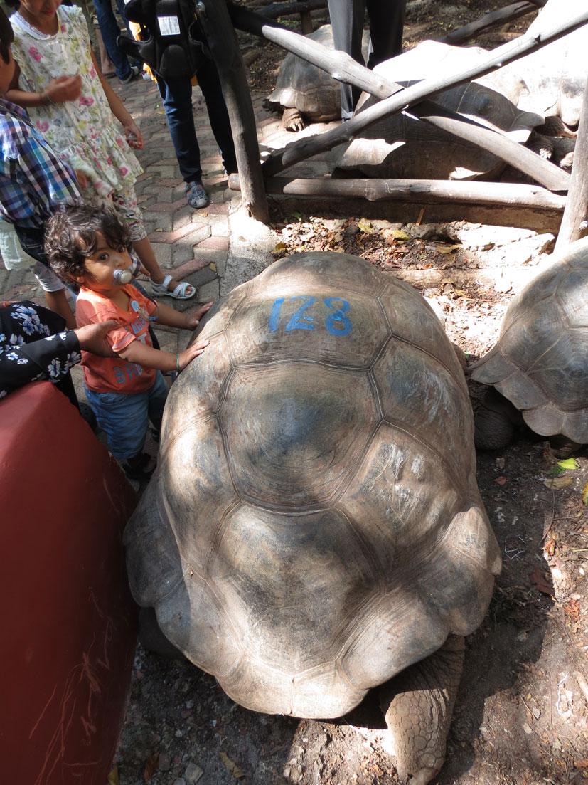 Hapishane Adası'ndaki bu kaplumbağa 128 yaşında. Henüz çok genç...
