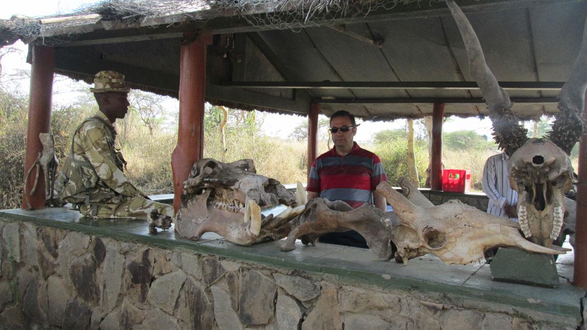 Nairobi Milli Parkı'nda  koruma görevi yapan bir Kenyalı asker, yabani hayvanlara ait kafataslarının da sergilendiği kulübesinde