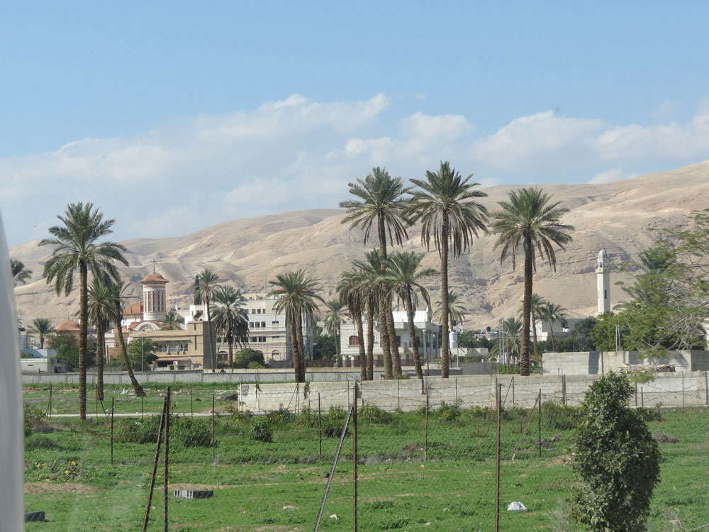 Eriha'da hurma ağaçları