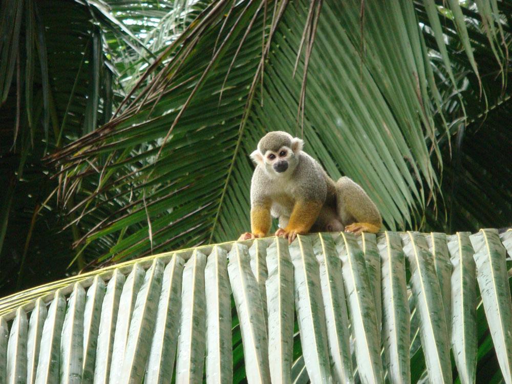 Adalardaki maymunlar insanlardan yiyecek almaya alışmışlar...