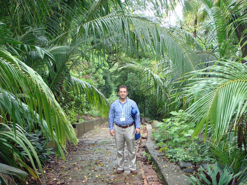 Bölgenin neredeyse tamamı yağmur ormanlarıyla kaplı