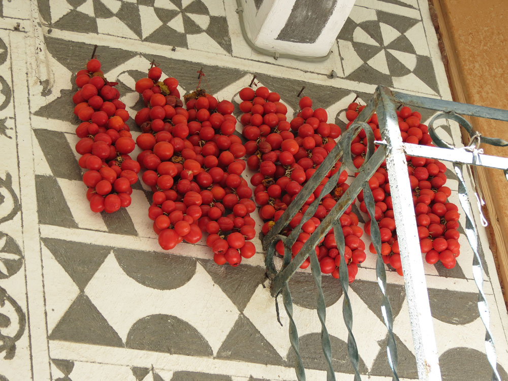 Pirgi Köyü'nde  kurutulan domatesler
