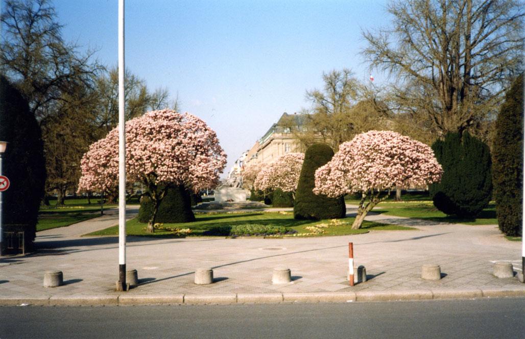 Ağaçların çiçek açtığı mevsim...