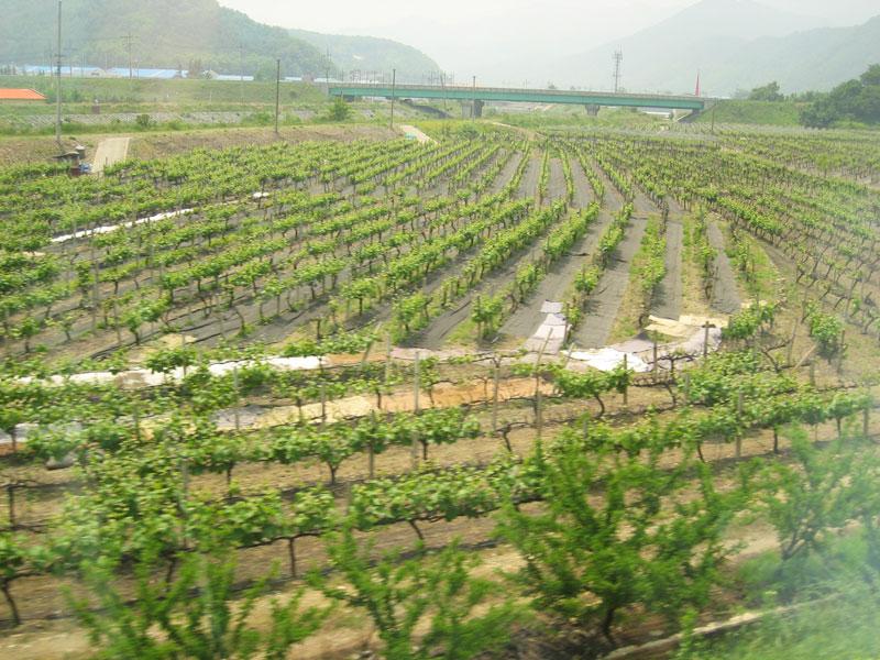 Yine yeşillendi Seul bağları...