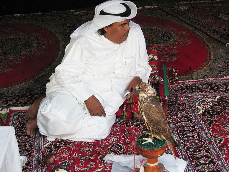 Şahin yetiştiriciliği Katar'ın milli sporlarından